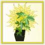 Das Wachstum - die vegetative Phase