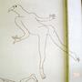 鳥のDNAに侵略される人間