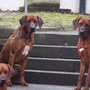 Filou, Walesco und Chaka Percy
