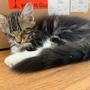 Hector, 13 Wochen