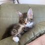 Hector, 11 Wochen