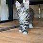 Hermes, 11 Wochen