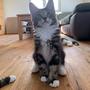 Hector, 14 Wochen