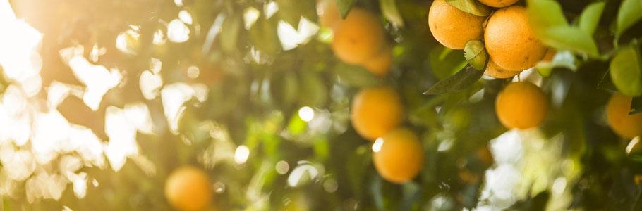 die Süsse Susi Früchte