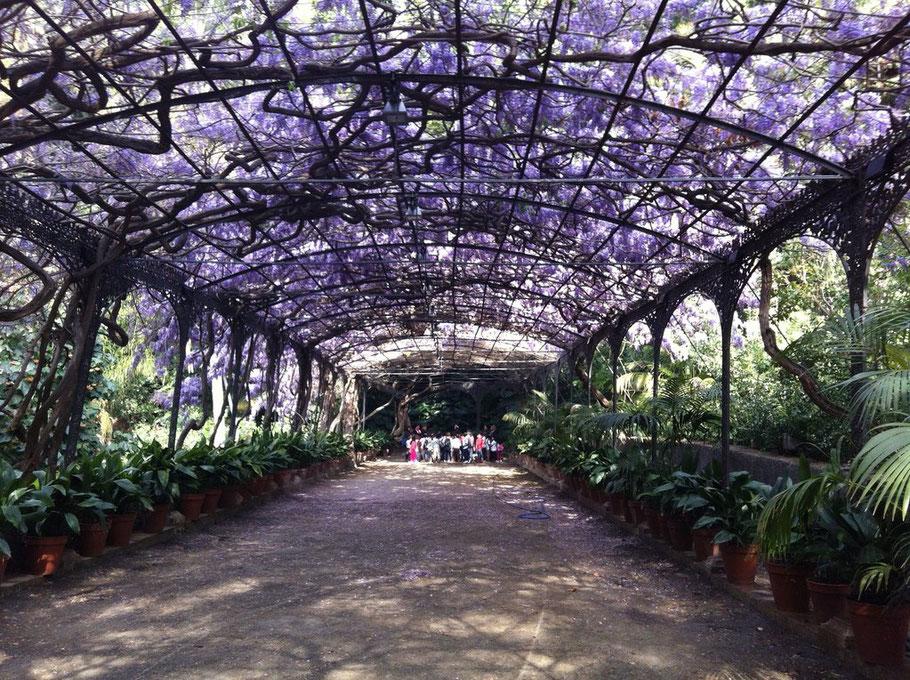 """La contada de ayer de """"Árboles con mucho Cuento...."""" en el Jardín Histórico-Botánico de la Concepción con alumn@s de CEIP GUADALHORCE."""