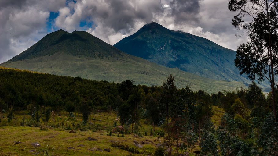 Parc National des Volcans in Rwanda