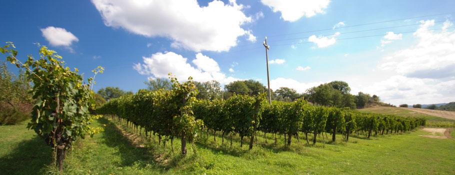 De wijngaarden vanwaar men kan uitzien over Montepulciano