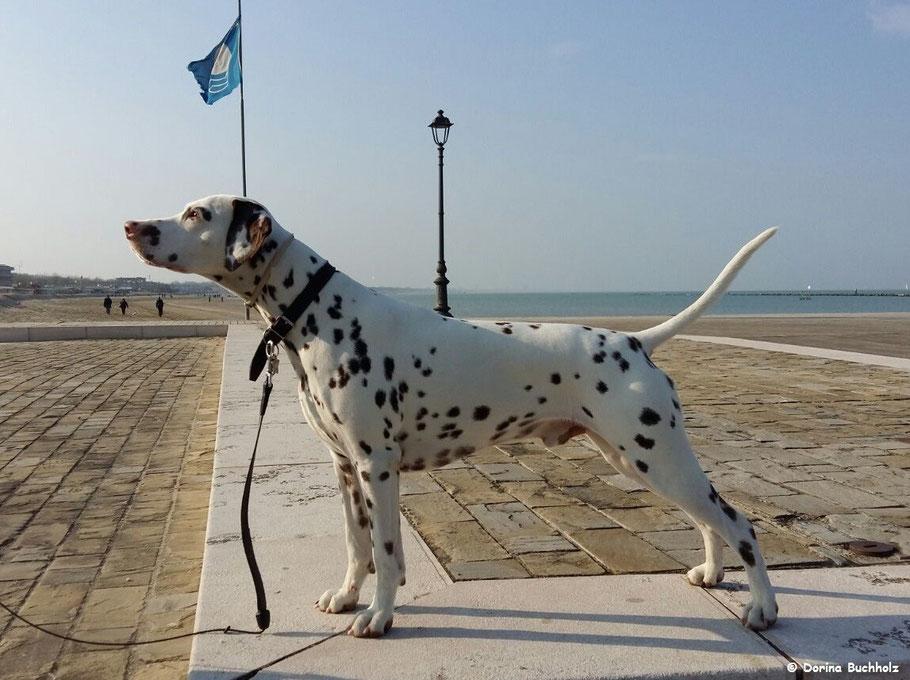 Somora´s Juniper Dream auf der Promenade von Cesenatico.... 26 März 2016