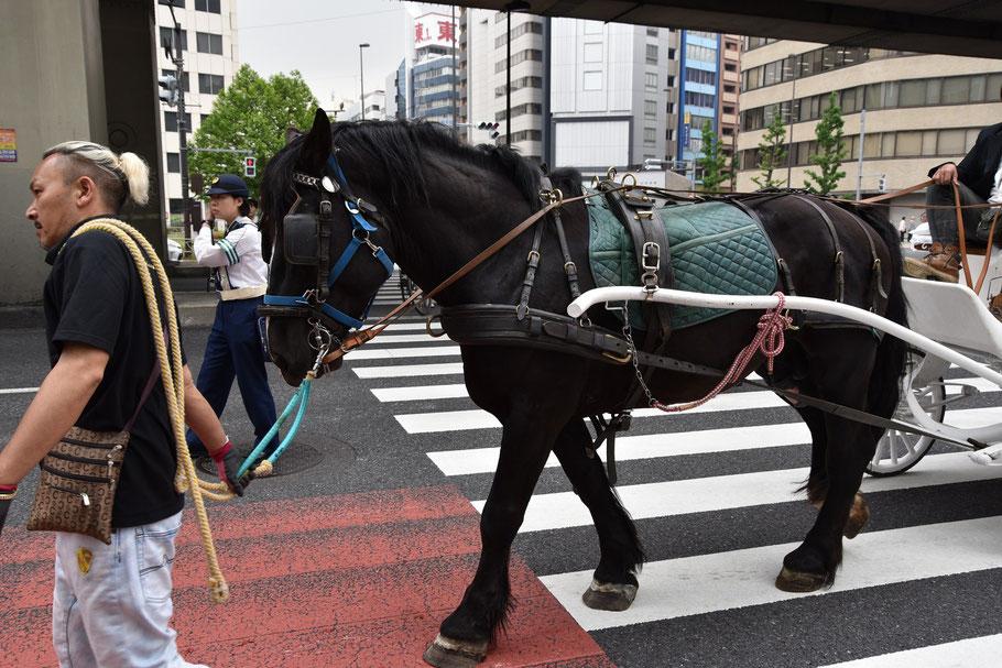都心の街を馬が闊歩するというレアな光景が拝めるのも、神田祭ならではかもしれません
