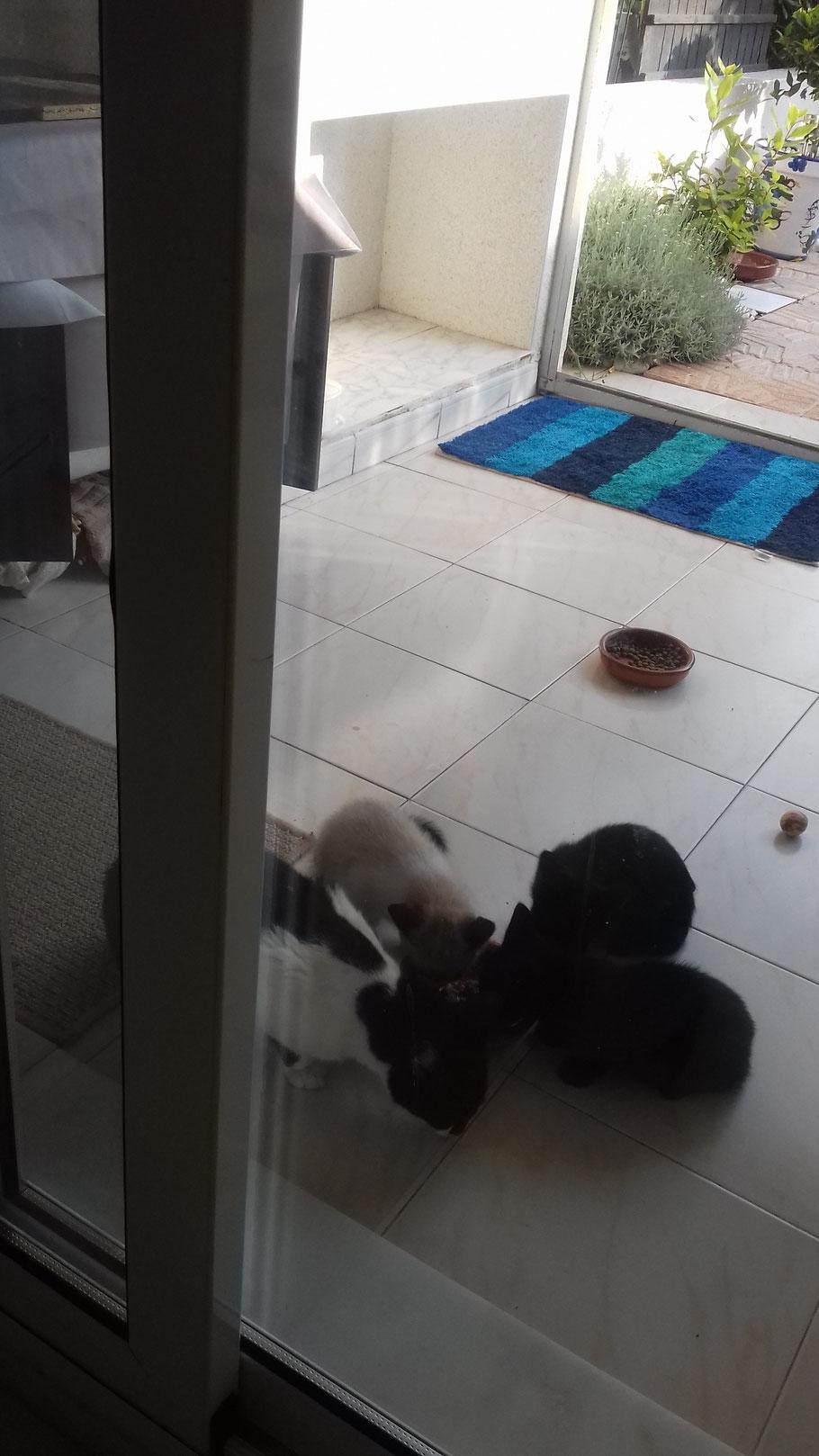 Mama-Gata y sus Gatitos