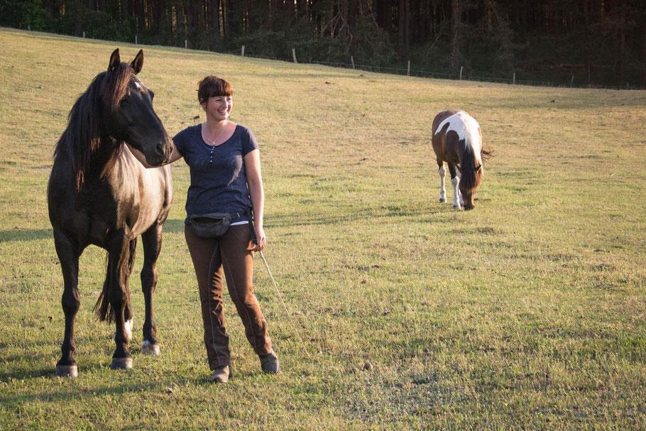 Clickertraining mit Pferden in Mecklenburg-Vorpommern und Brandenburg