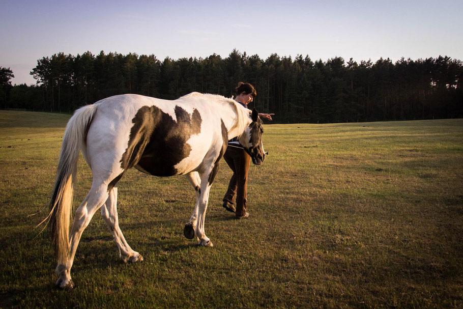 Freiarbeit mit Pferden in Mecklenburg-Vorpommern und Brandenburg