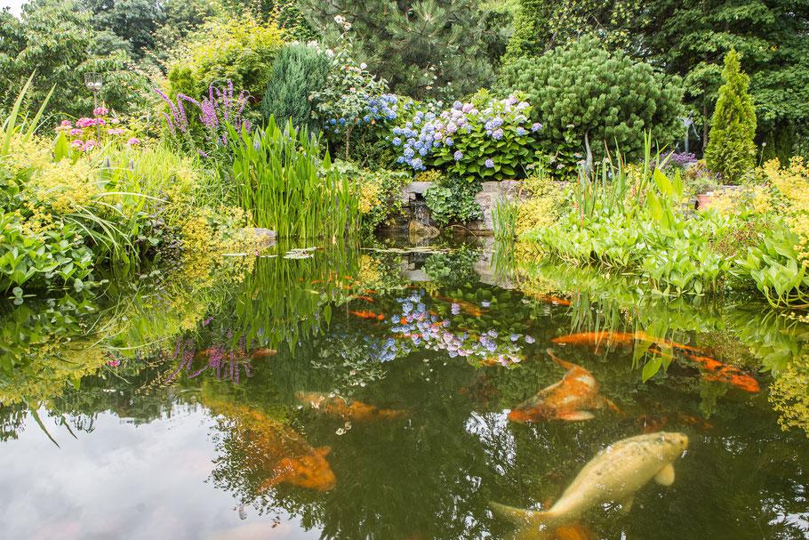 Garten- und Landschaftsbau in Würzburg, Gartenumgestaltung und Gartenneuanlage mit Bewässerung, Mähroboter, Teichbau, Pflanzarbeiten