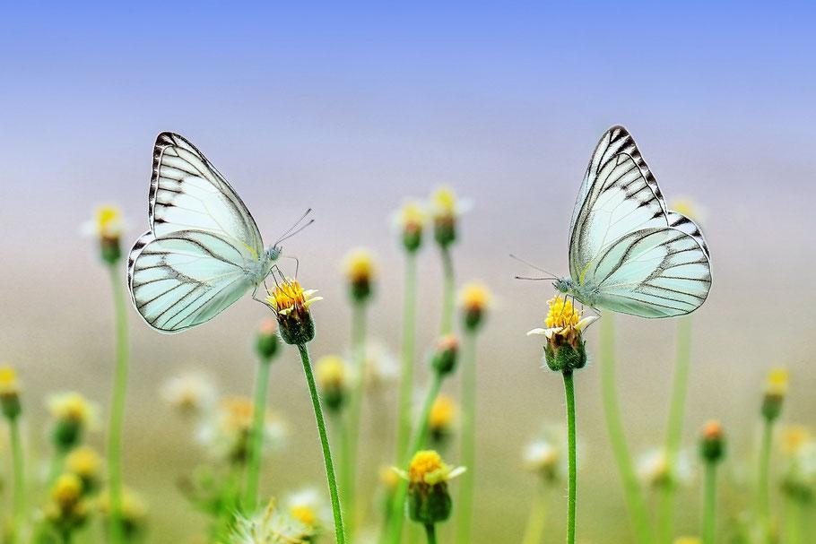 Blumen und Pflanzen fördern das Wohlbefinden und die Gesundheit
