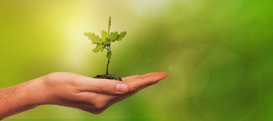 Warum wir Pflanzen brauchen: Bäume produzieren Sauerstoff