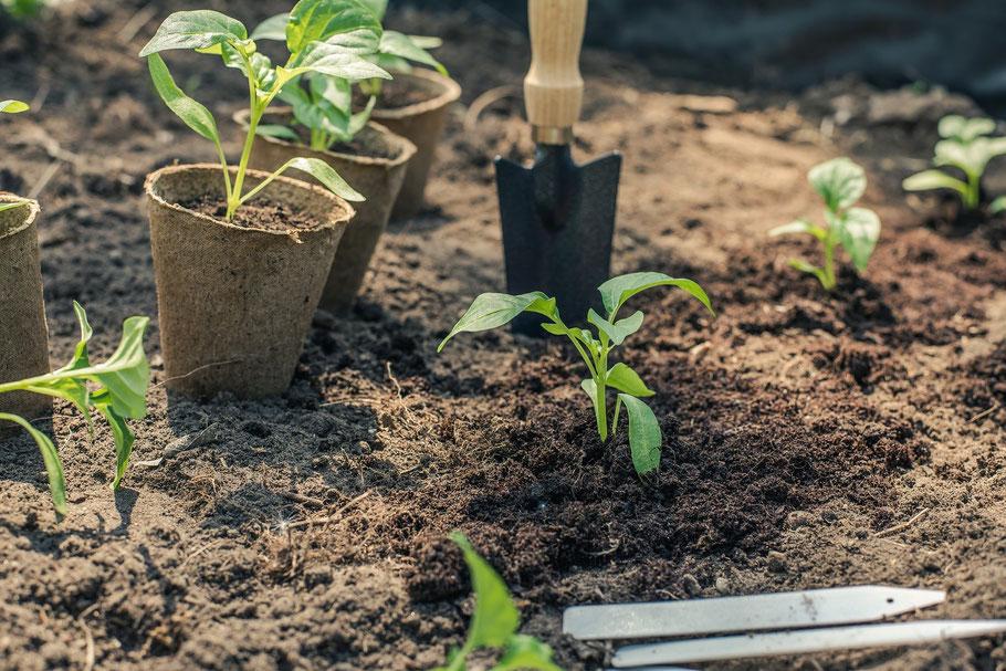Blumen und Pflanzen pflanzen für den Naturschutz
