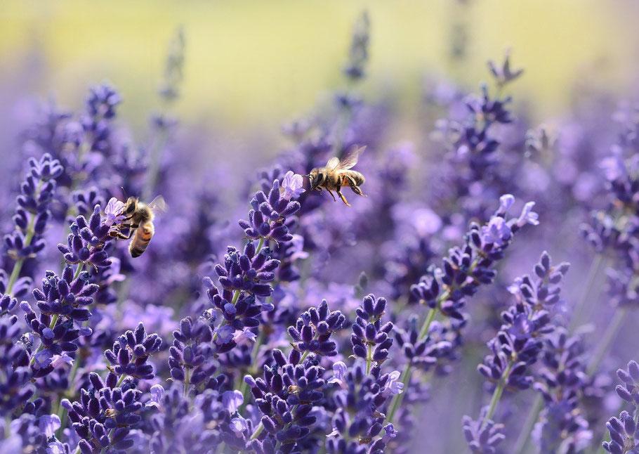 Blumen und Pflanzen für Bienen und Insketen in Würzburg