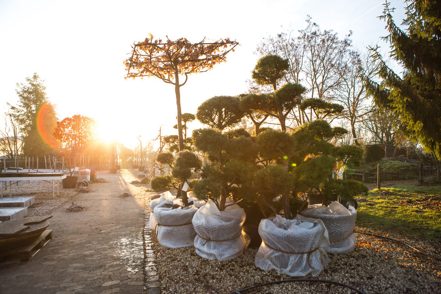 Pflanzen richtig Überwintern: Tipps vom Profi