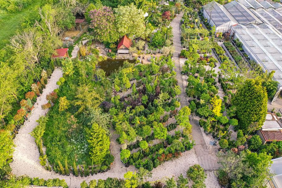 Obstbaum, Beeren, Beerensträucher kaufen in Baumschule Hupp in Höchberg bei Würzburg