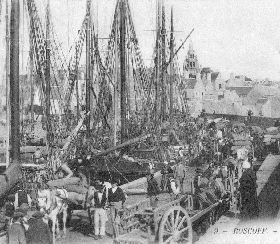 Les voiliers de cabotage embarquaient dans la cale, avec le chargement d'oignons, de 5 à 30, jeunes paysans, marchands d'oignons, surnommés outre-manche johnnies