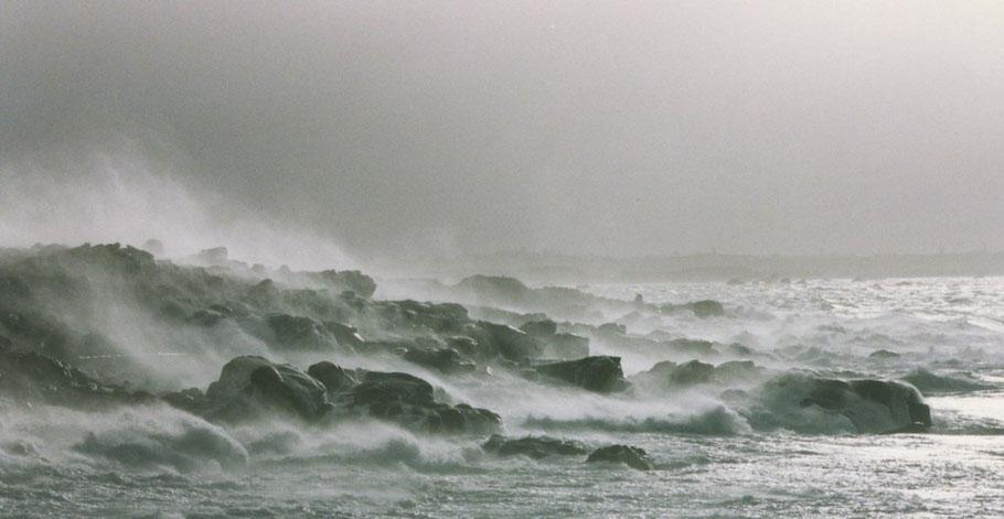 Aod ar coz vilin, côte ouest de l'île de Batz, photo Marie-Laure Decosse janvier 1998