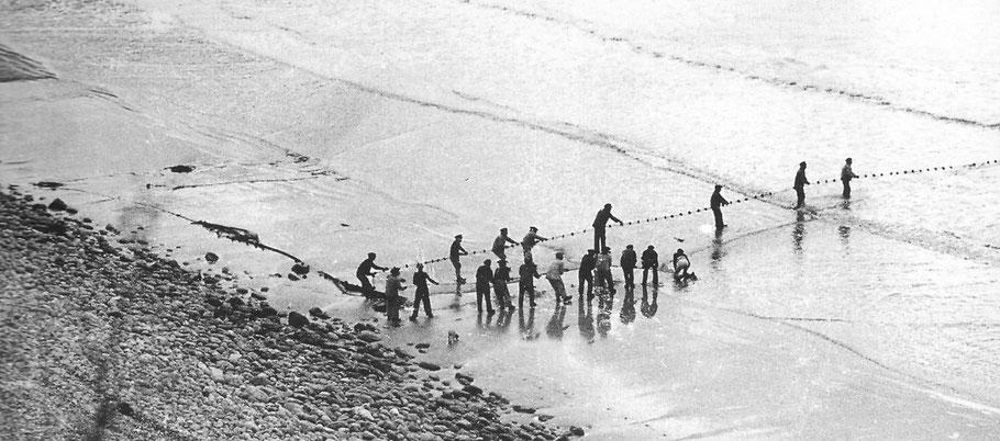 La technique de pêche à la senne nécessite de nombreux hommes, plusieurs équipages s'associaient. A défaut de photo de Cancale ici c'est à Morgat dans les années 50 photo Ar Vag V