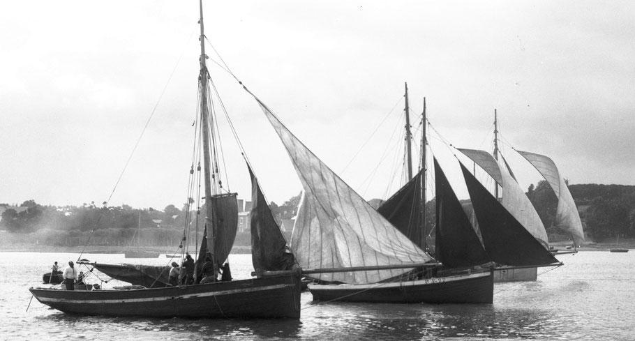 Sloups langoustiers de Loguivy, aux régates de Paimpol vers 1910, mouillés sur croupia le départ se fait vent arrière (Coll. perso)
