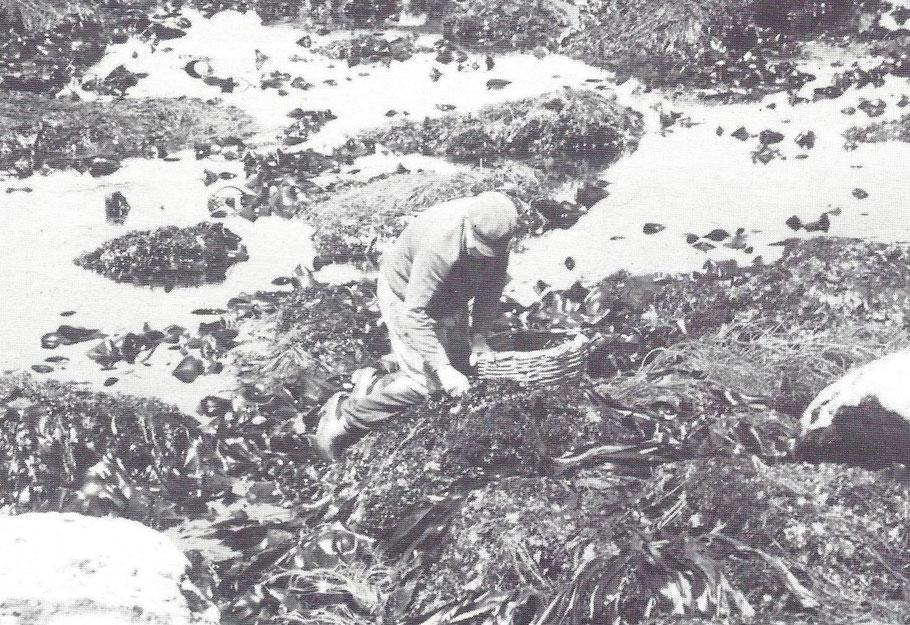 Ramassage du lichen dans les cailloux photo Pierre Arzel
