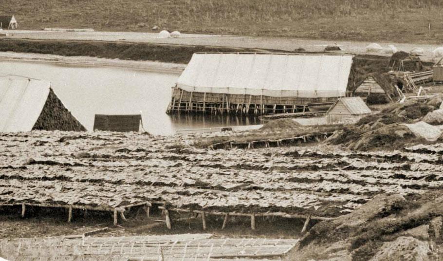 Vu d'un échafaud construit comme une estacade au-dessus  de l'eau et couvert comme une tente en toile à voile les morues sèchent sur les rances, on aperçoit également les habitations  (photo Paul Emile Miot 1859)