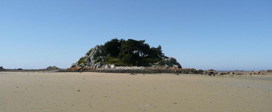 La roche aux genêts, dans l'Ouest de Zilliec, cet ilot, ici vu du sud, apparait tout rond et couvert de végétation