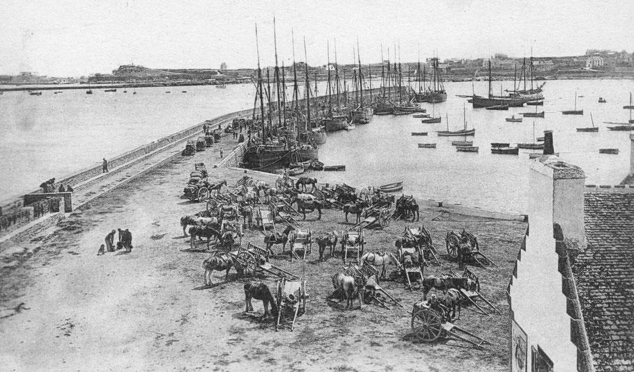L'exportation des oignons, le premier comblement, favorise la circulation hippomobile  et les chevaux attendent tranquillement