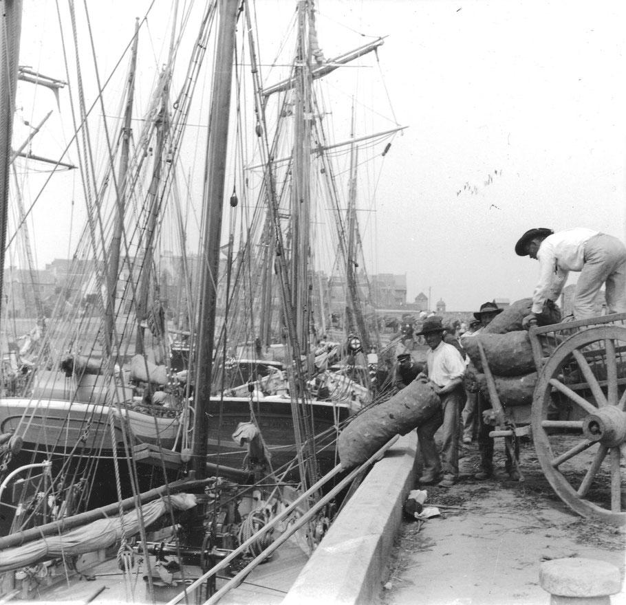 Au vieux quai de Roscoff, embarquement des sacs d'oignons à bord d'un sloup de cabotage les agriculteurs livrent directement en charrettes leur production aux bateaux (Coll. perso)