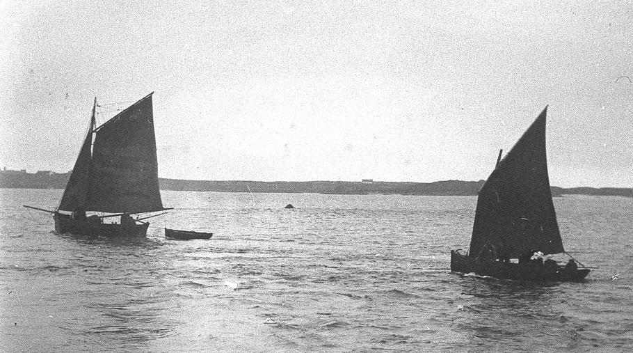 Gabare de l'île de batz avec son canot en remorque et péniche avec ses passagères longeant Roscoff et faisant route vers l'île (Photo coll Pierre-Yves Decosse)