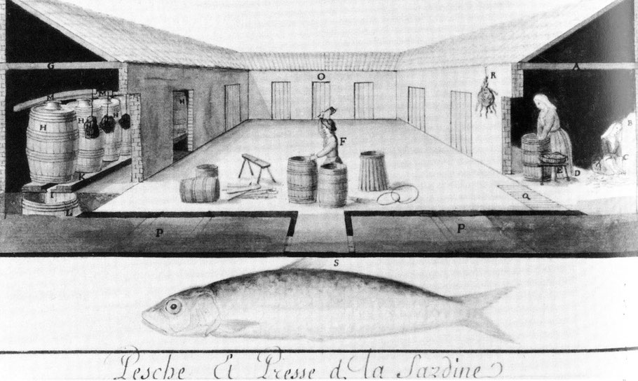 Presses à sardine, avant l'invention de la conserve en boite au XIXème siècle, la sardine était pressée en  fut