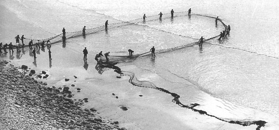 La poche de la senne se referme sur la pêche à Morgat dans les années 50 photo Ar Vag V