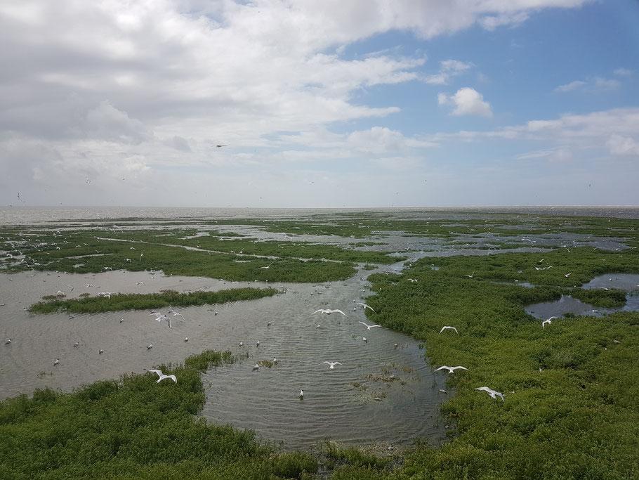 Überflutete Hallig Norderoog - Jeremias Hampel_Henriques ©