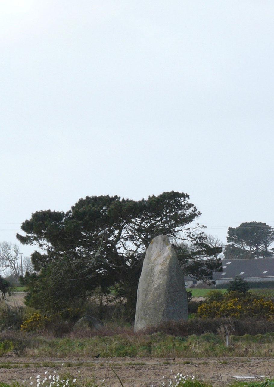 Menhir de Memoignon en Plounéour-Treiz