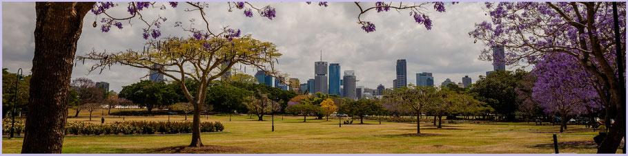 Australien, Australia, Reisebericht Australien, Reisebericht Queensland, Queensland, Brisbane, Nes Farm, New Farm Park, Jacaranda Tree