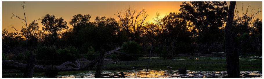 Australien, Australia, Reisebericht Australien, Reisebericht Queensland, Queensland, Outback, Charlotte Plain, Sunset, Outback Sunset