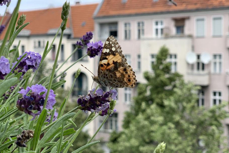 Foto:Hanna Pfüller