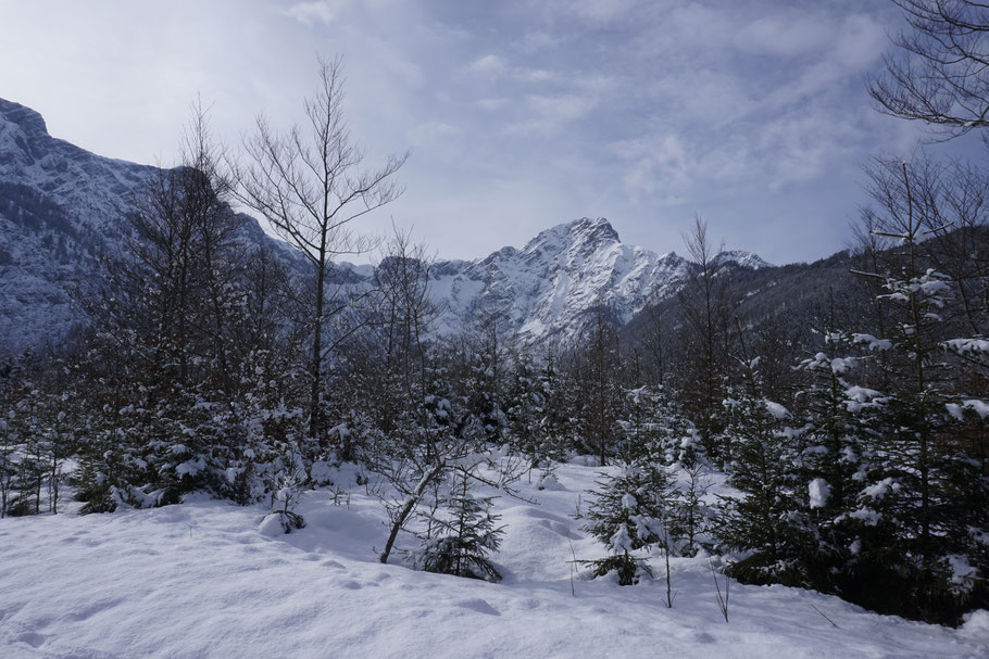 berghundtal, wandern mit hund,almsee,totes gebirge,berghund,skitour