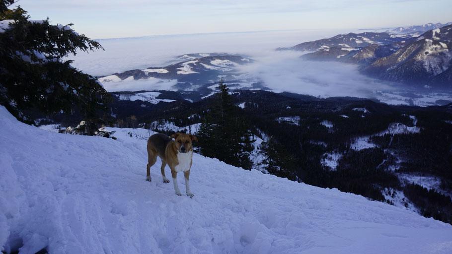 berghundtal, kasberg, alpen,salzkammergut,skitour,sonnenuntergang,oberösterreich,wandern mit hund,steineck