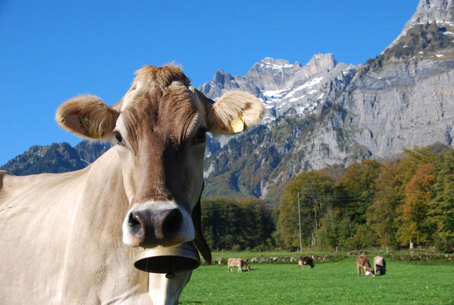 Juma Glarnerland Toller Blogg mit Themen und vielen Bilder aus dem Glarnerland