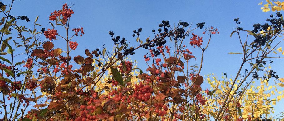 Der Herbst ist Erntezeit! Okt. 18