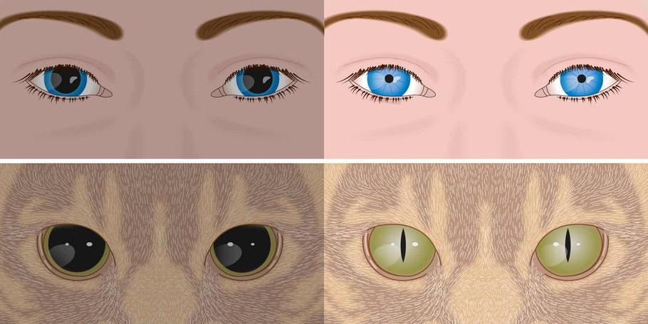Pupillenform bei Dunkelheit und Licht