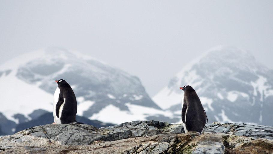 Zwei Pinguine auf einem Felsen in der Arktis. Bild von Eduardo Ruiz auf Pixabay.
