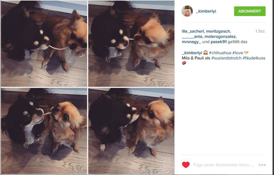 Chi-Love.de | BLOG | Magazin | Instagram | Chihuahua |Nudelkuss-mit-Mila-und-Pauli