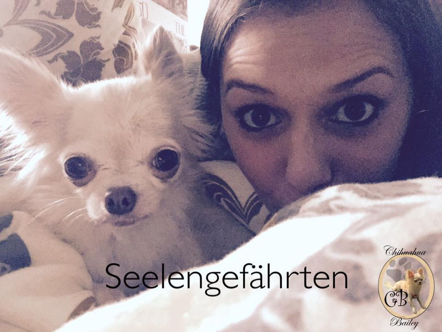 Chi-Love.de | Blog | Chihuahua | Epilepsie | Bailey | Lara Christin