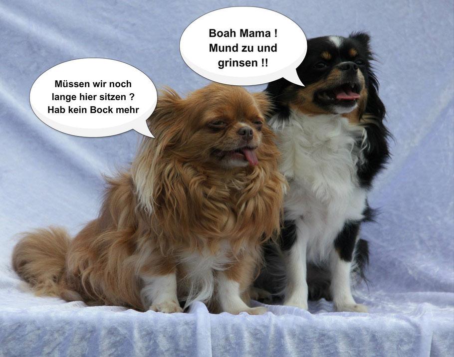 """Piraten-Cartoon auf Chi-Love.de präsentiert: Chihuahuas von den kleinen Piraten  """"Müssen wir hier noch lange sitzen?"""""""