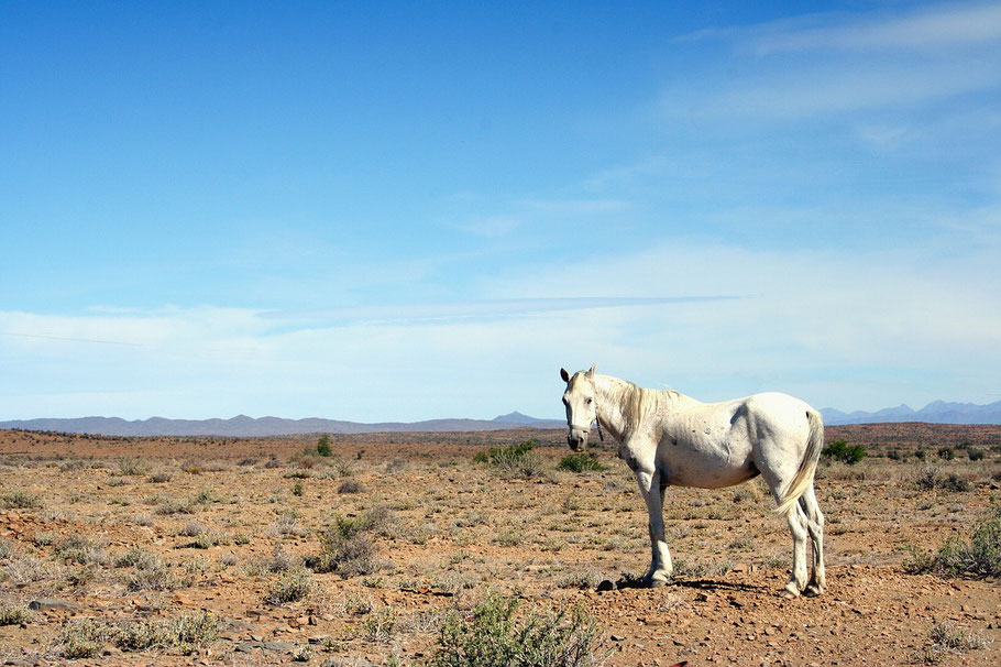 Pferd steht bei Hitze und Sonnenschein auf einem kargen Feld.